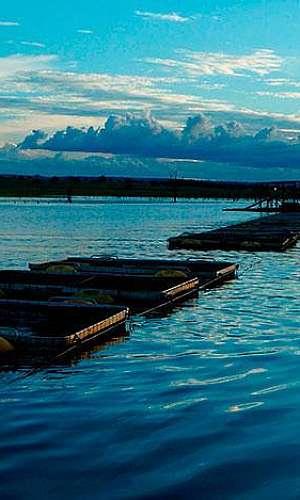 Tela para piscicultura